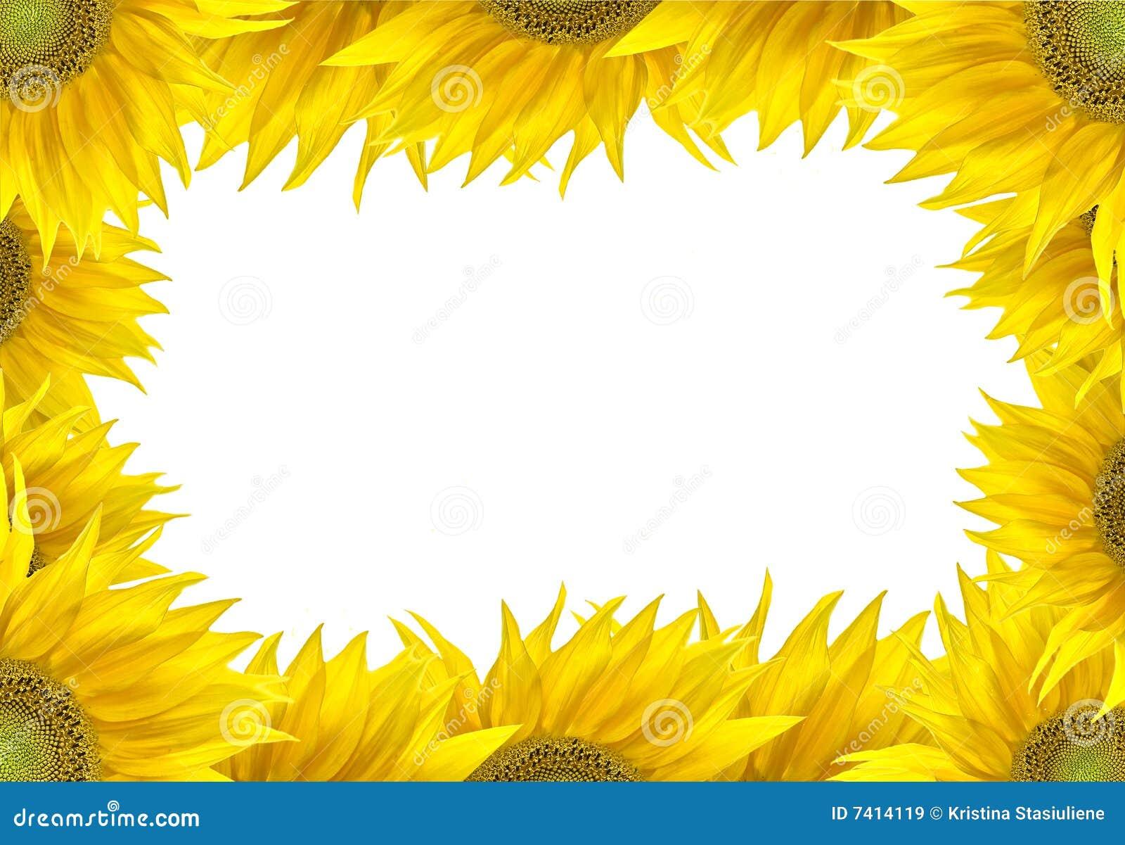 Sunflower frame stock image. Image of fresh, closeup, plant - 7414119