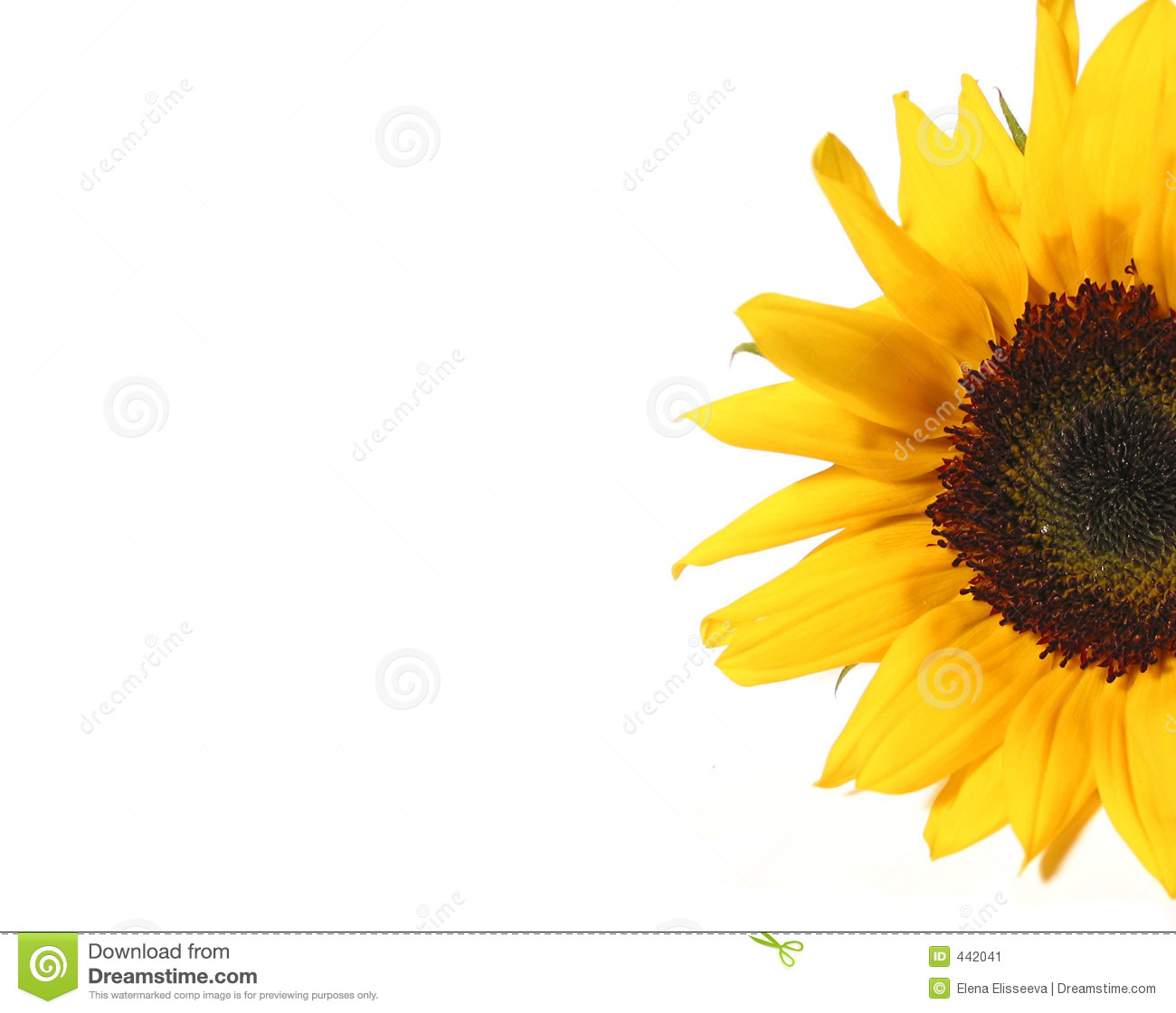 Sunflower Half Stock Image Image Of Background Detail