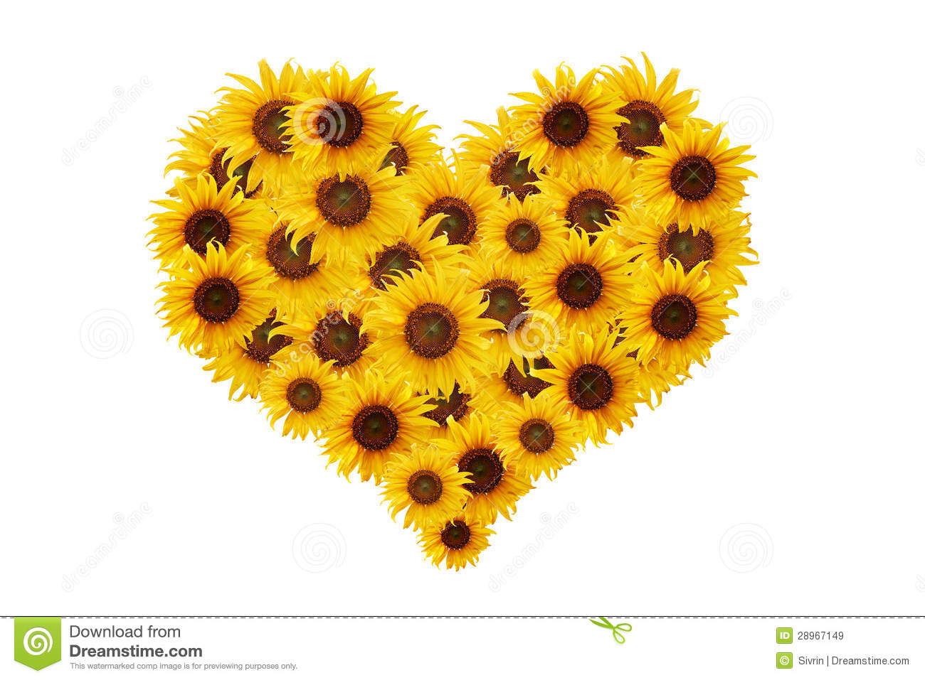 Sunflower Heart Royalty Free Stock Images Image 28967149