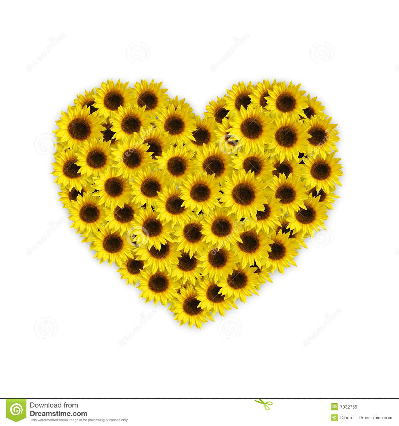 Yellow sunflowers in a heart shape isolated on white background.