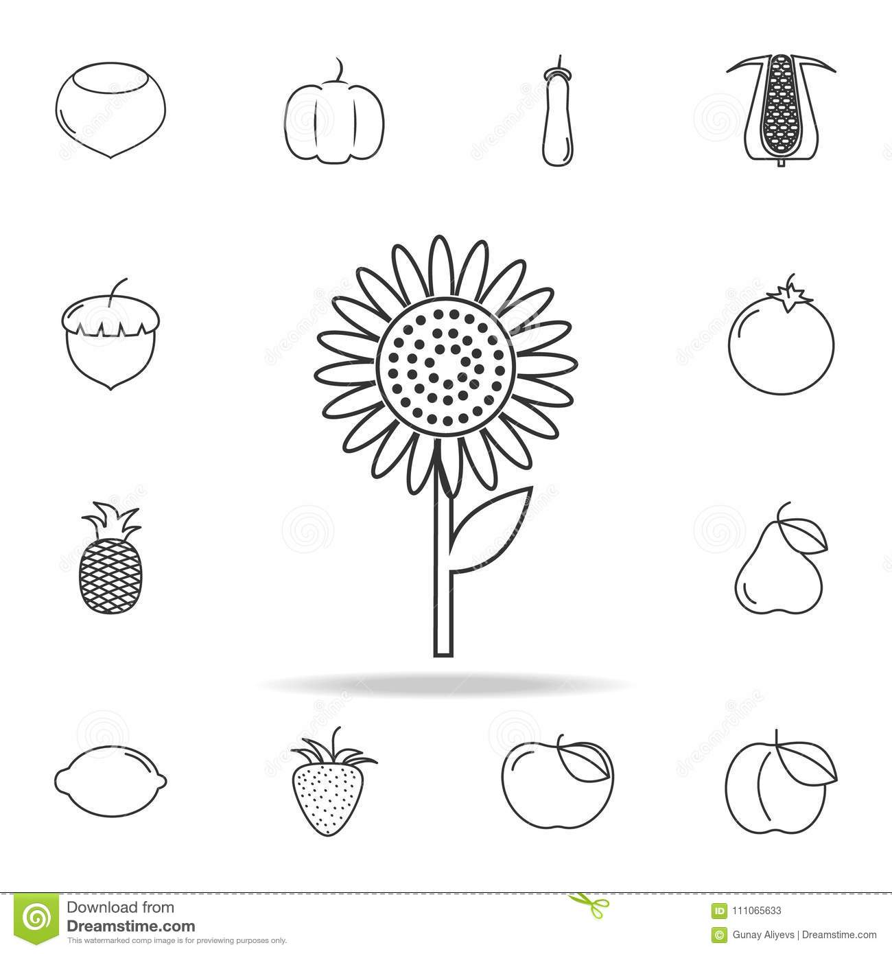 Sunflower Icon Set Of Fruits And Vegetables Icon Premium Quality
