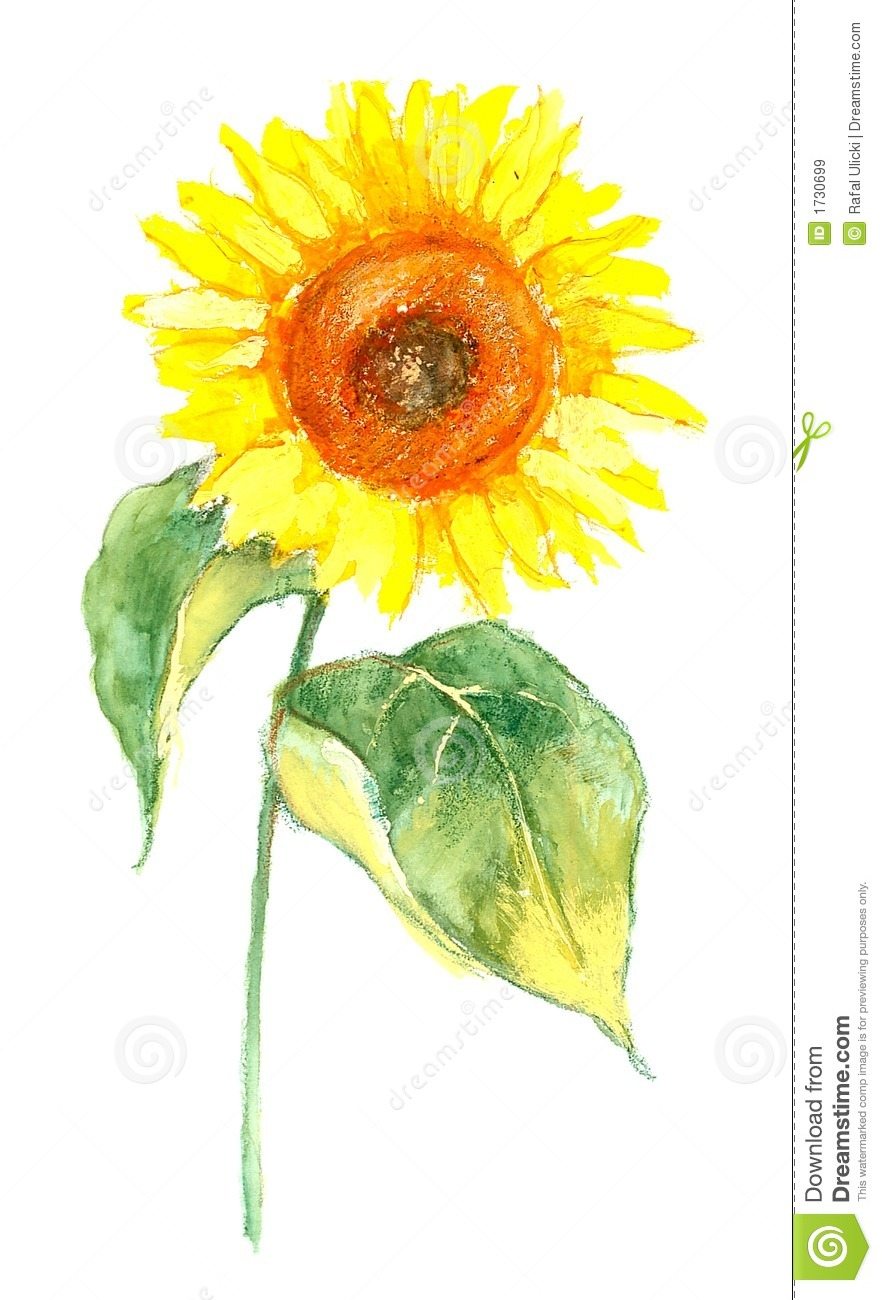 Sunflower Illustration Royalty Free Stock Images - Image: 1730699