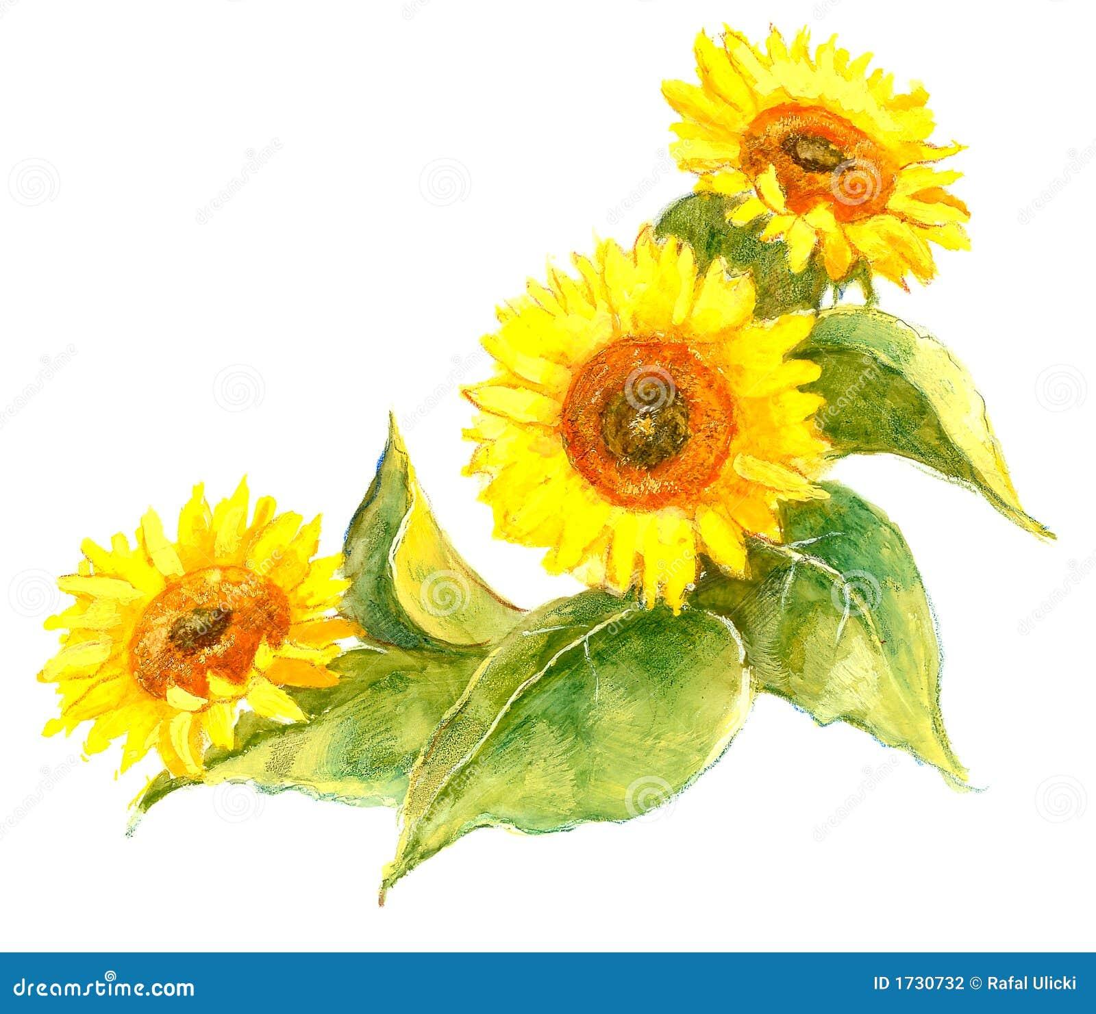 Sunflower Illustration Stock Photography - Image: 1730732