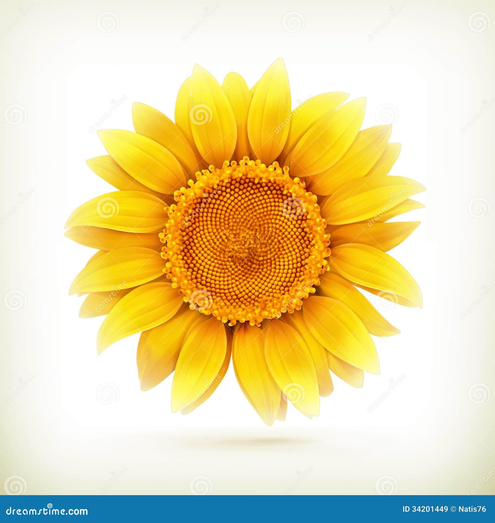 Sunflower Royalty Free Stock Images - Image: 34201449