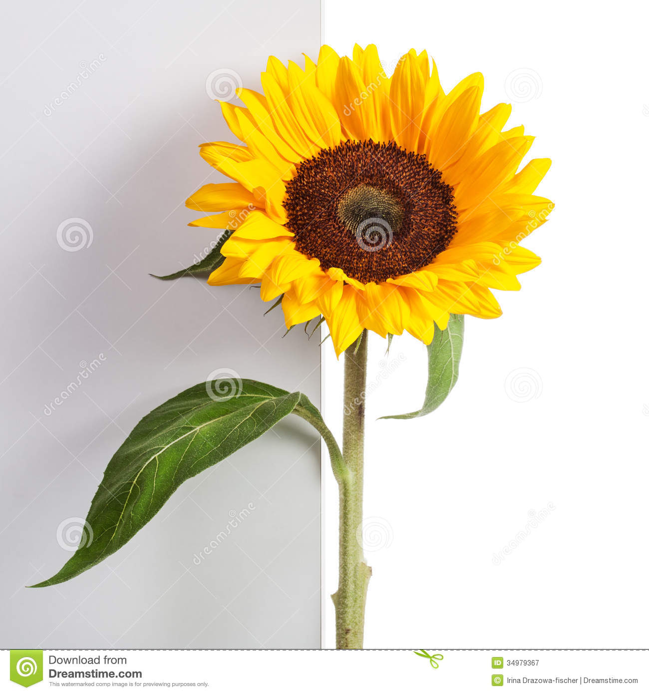 Nice Sunflower Leaf Template Pictures Inspiration ...
