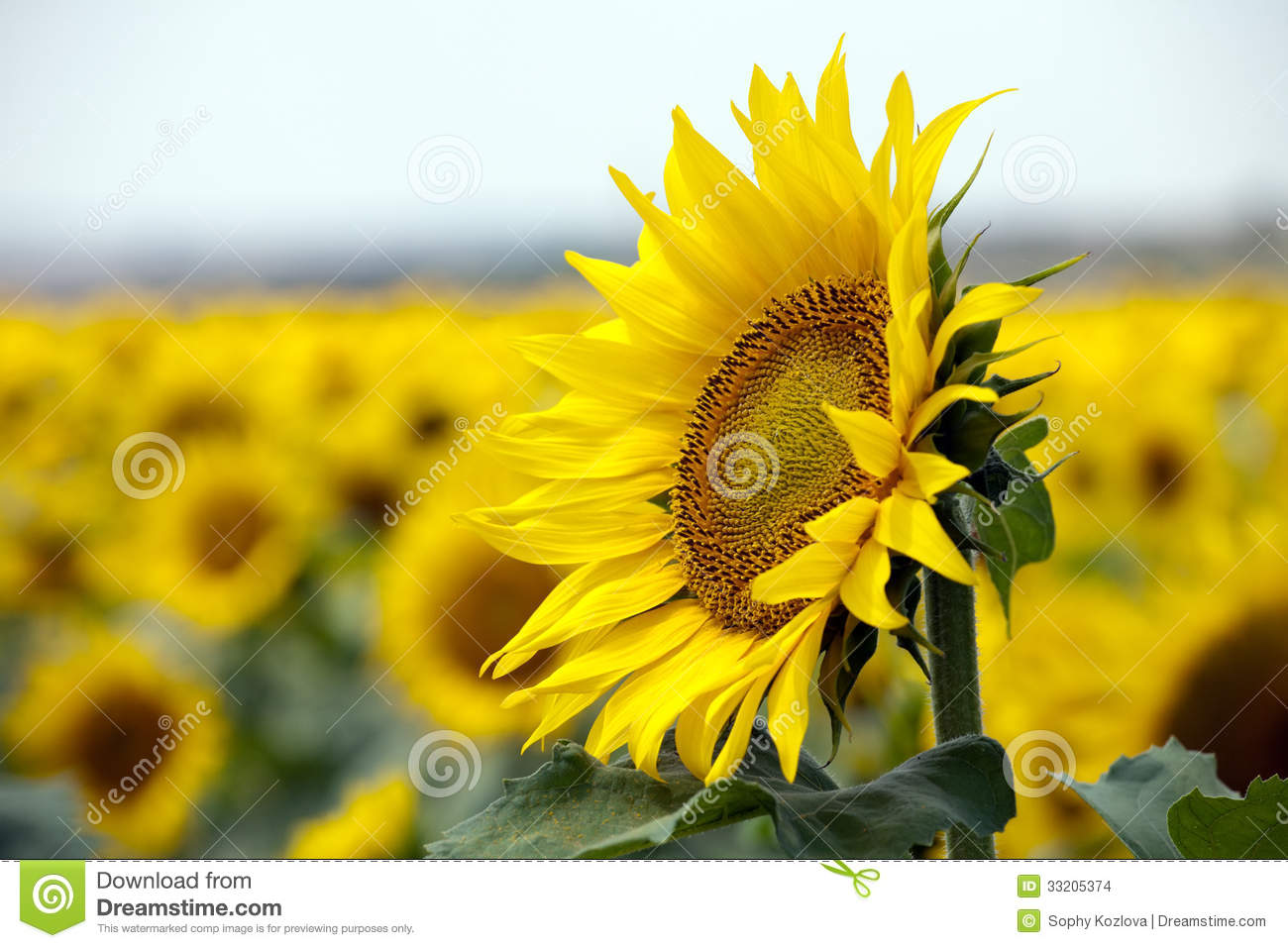 sunflower single catholic girls Men, here are a few catholic dating snags you don't want to get caught up in.