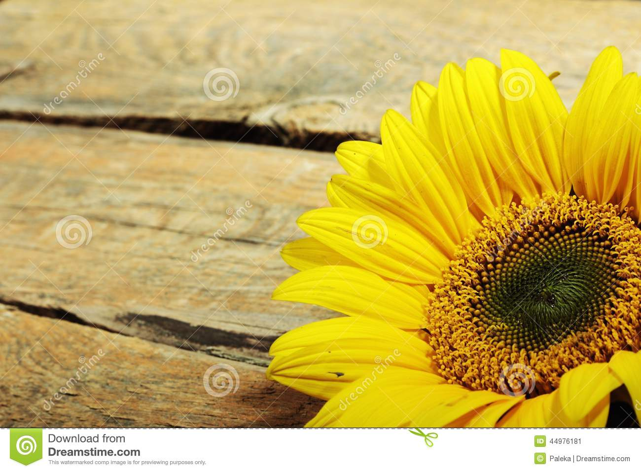 Sunflower Stock Image Of Natural Nature Flower