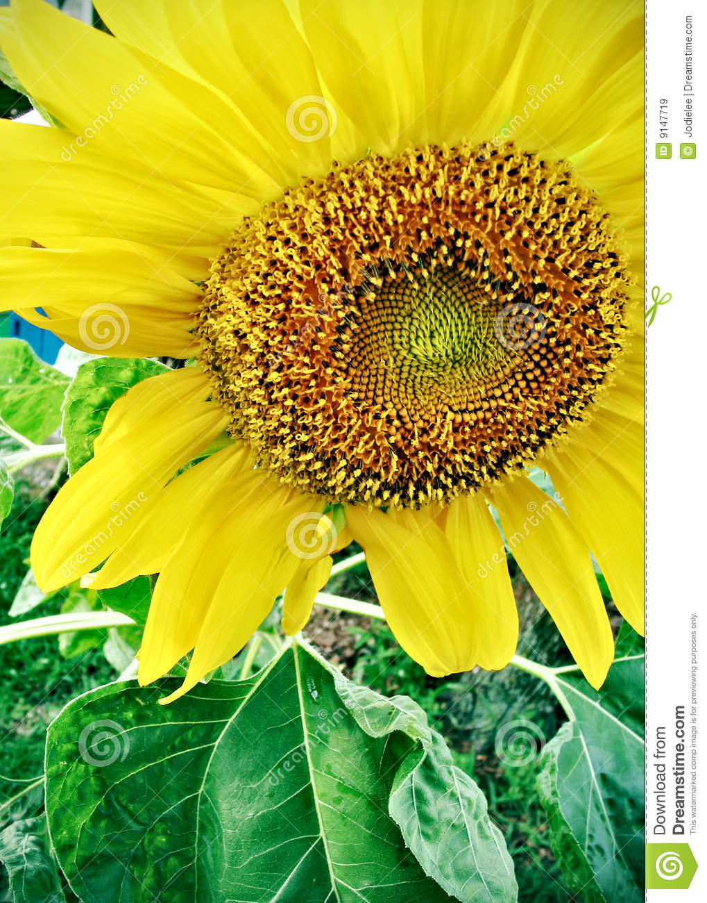High Quality Long Stem Big Head Artificial Sunflower ...