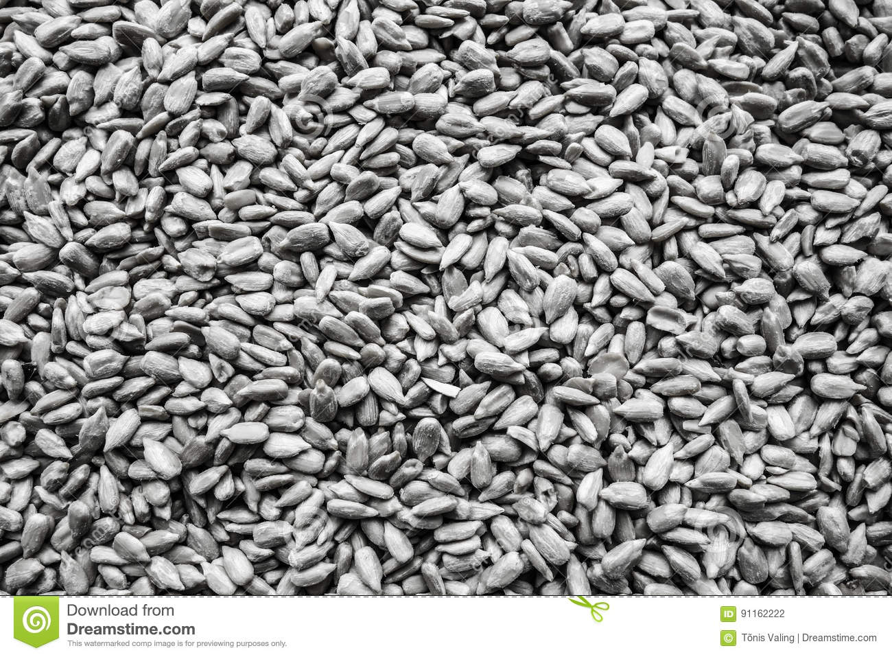 Sunflower Seed Background Black And White Stock Photo
