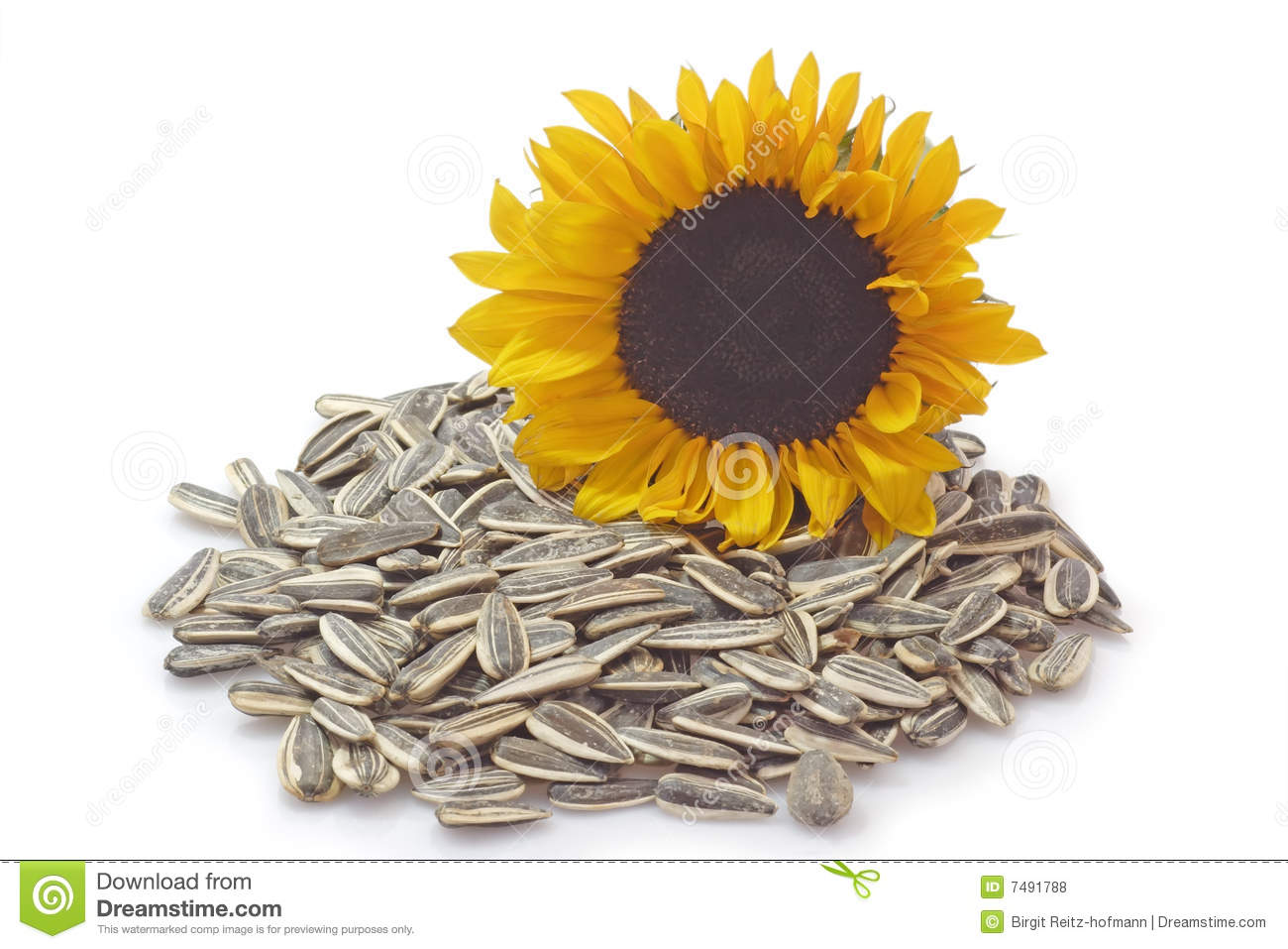 david sunflower seeds clipart - photo #10