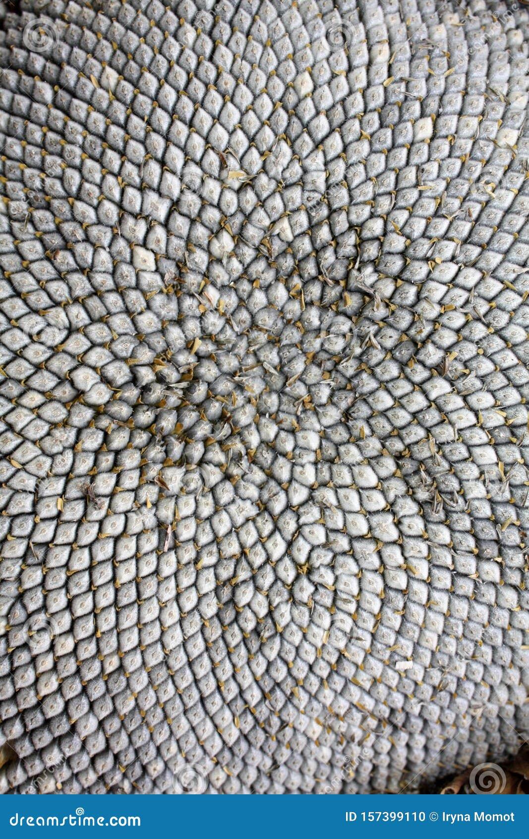 Sunflower Seeds Texture Wallpaper Macro Seeds The