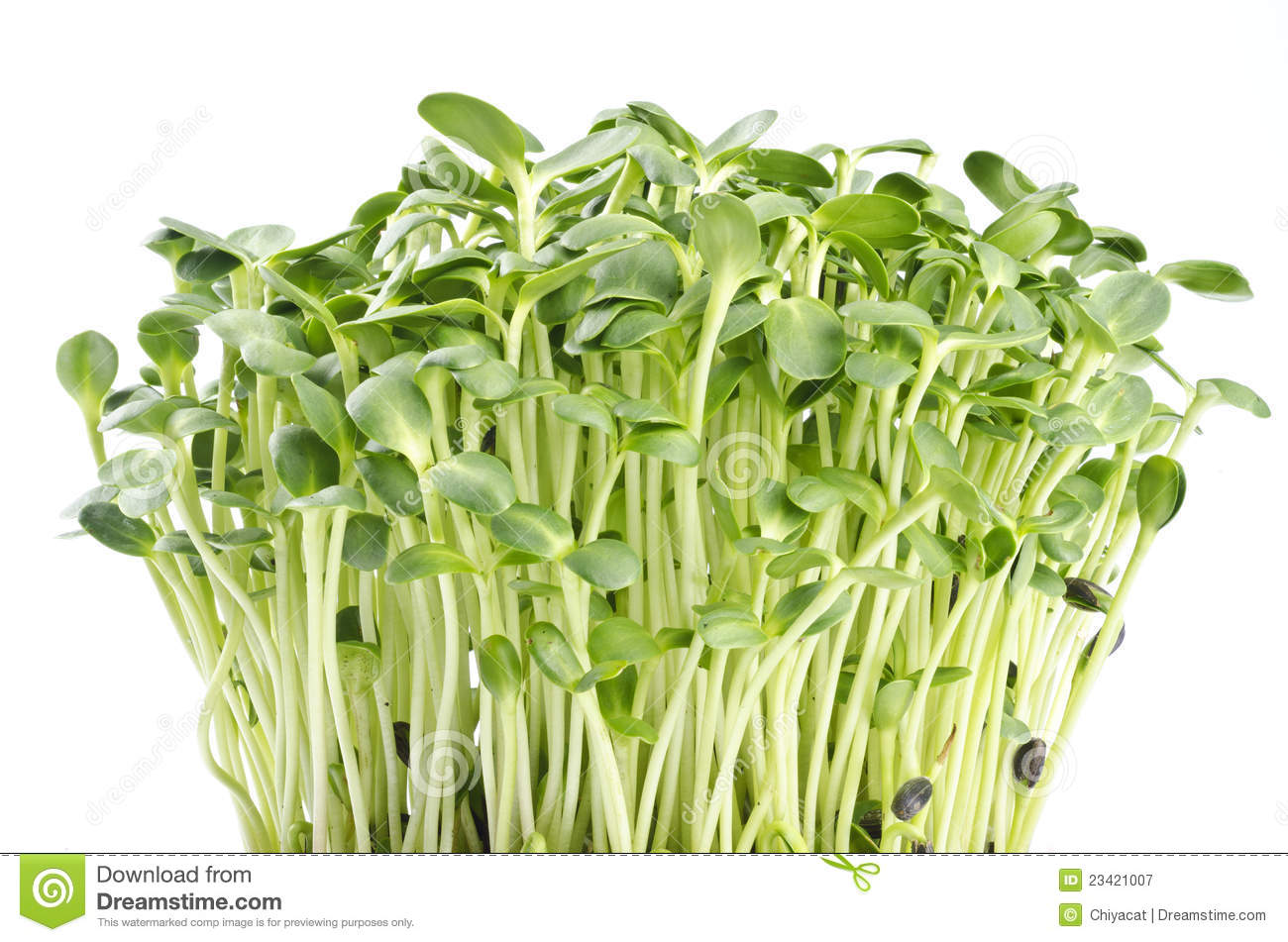 5 Health Benefits of Eating Sunflower Sprouts (Plus a Juice Recipe ...
