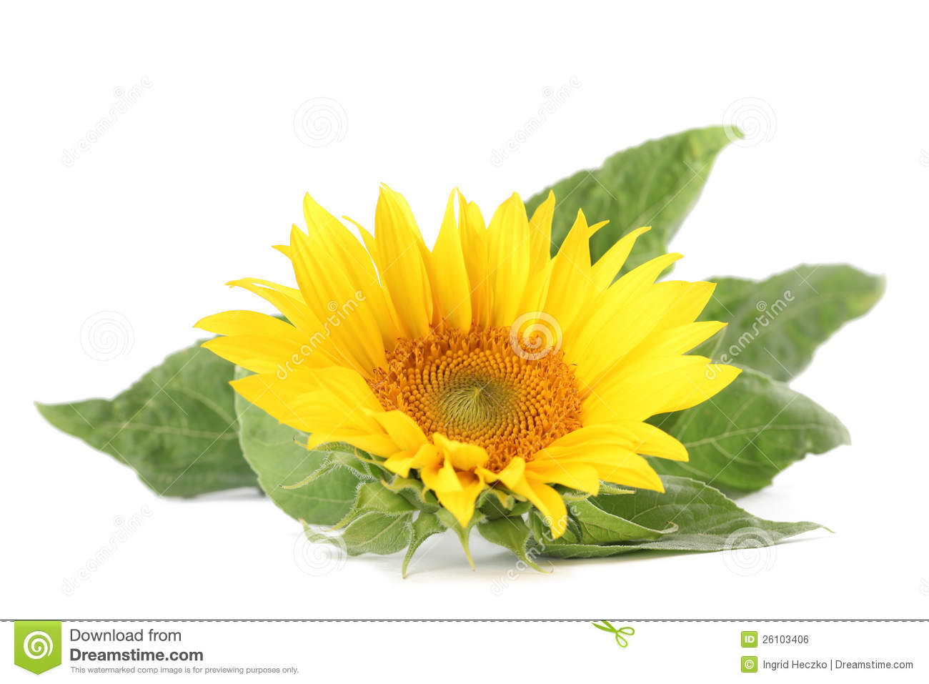 Sunflower business plan