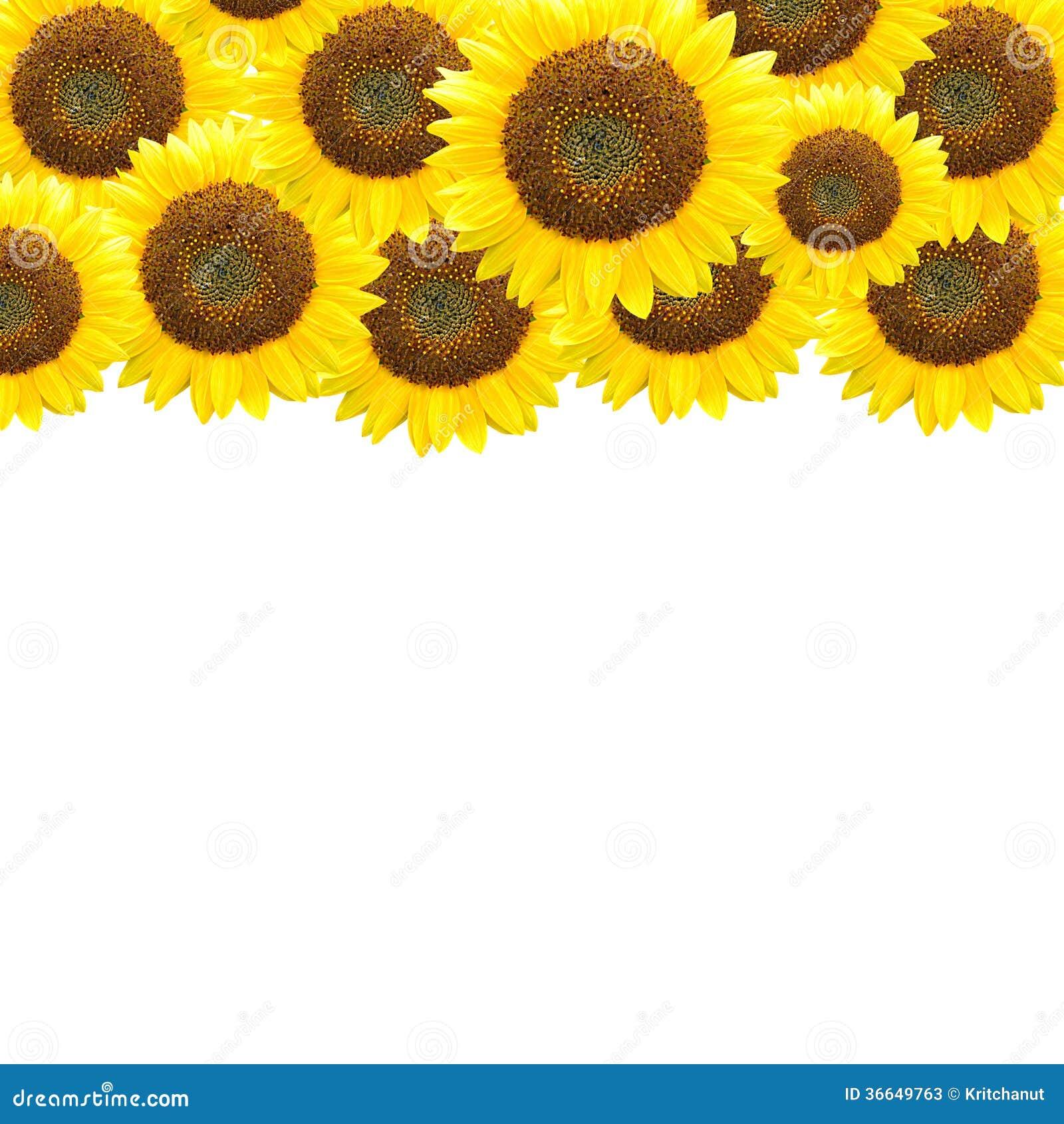Sunflowers - Border Design Stock Photos - Image: 36649763
