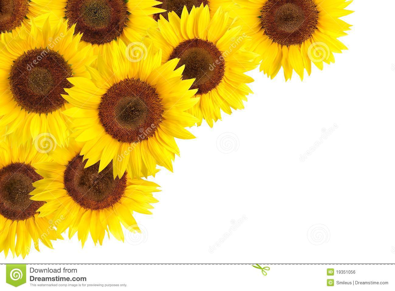 sunflowers border with white copy space royalty free stock