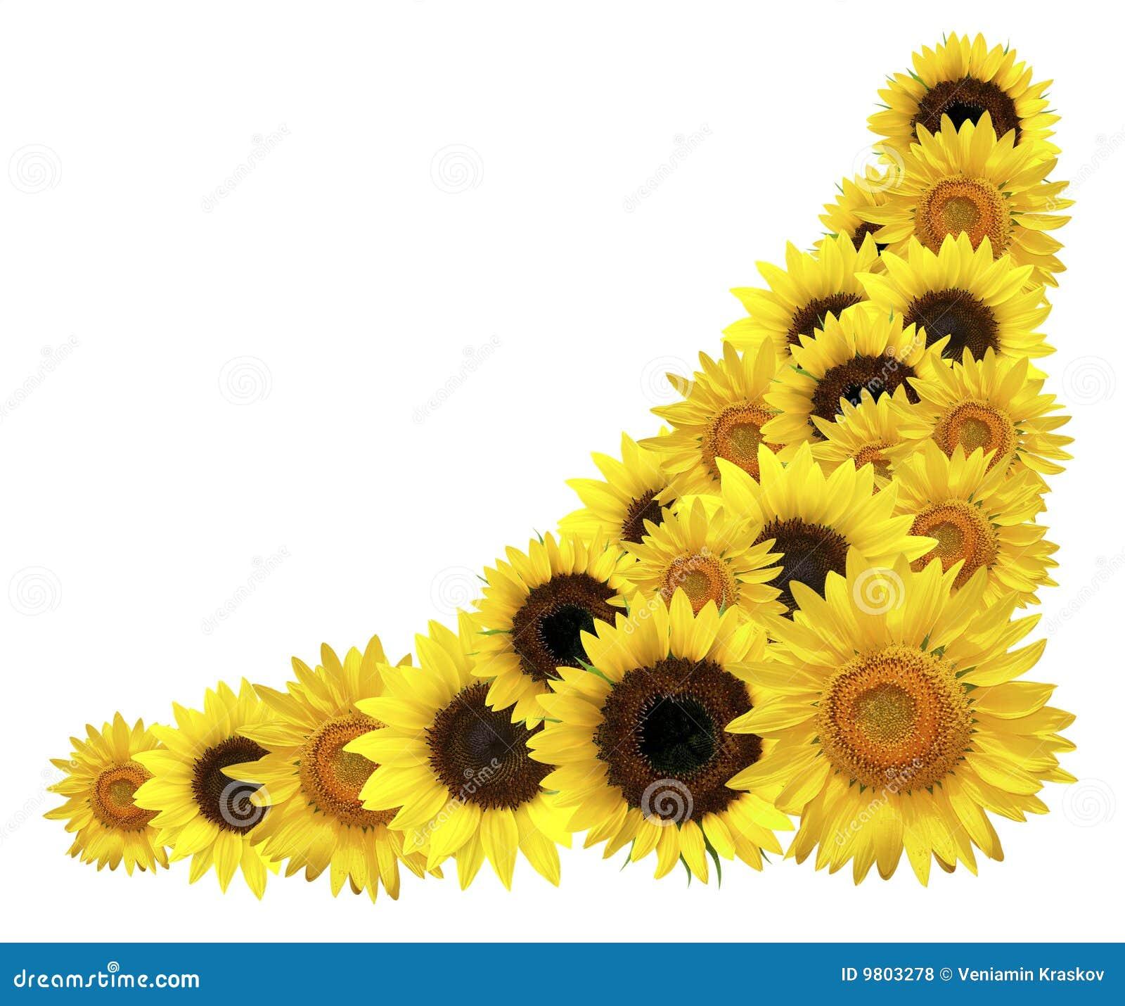 Sunflower Corner Border Clipart | www.pixshark.com ...