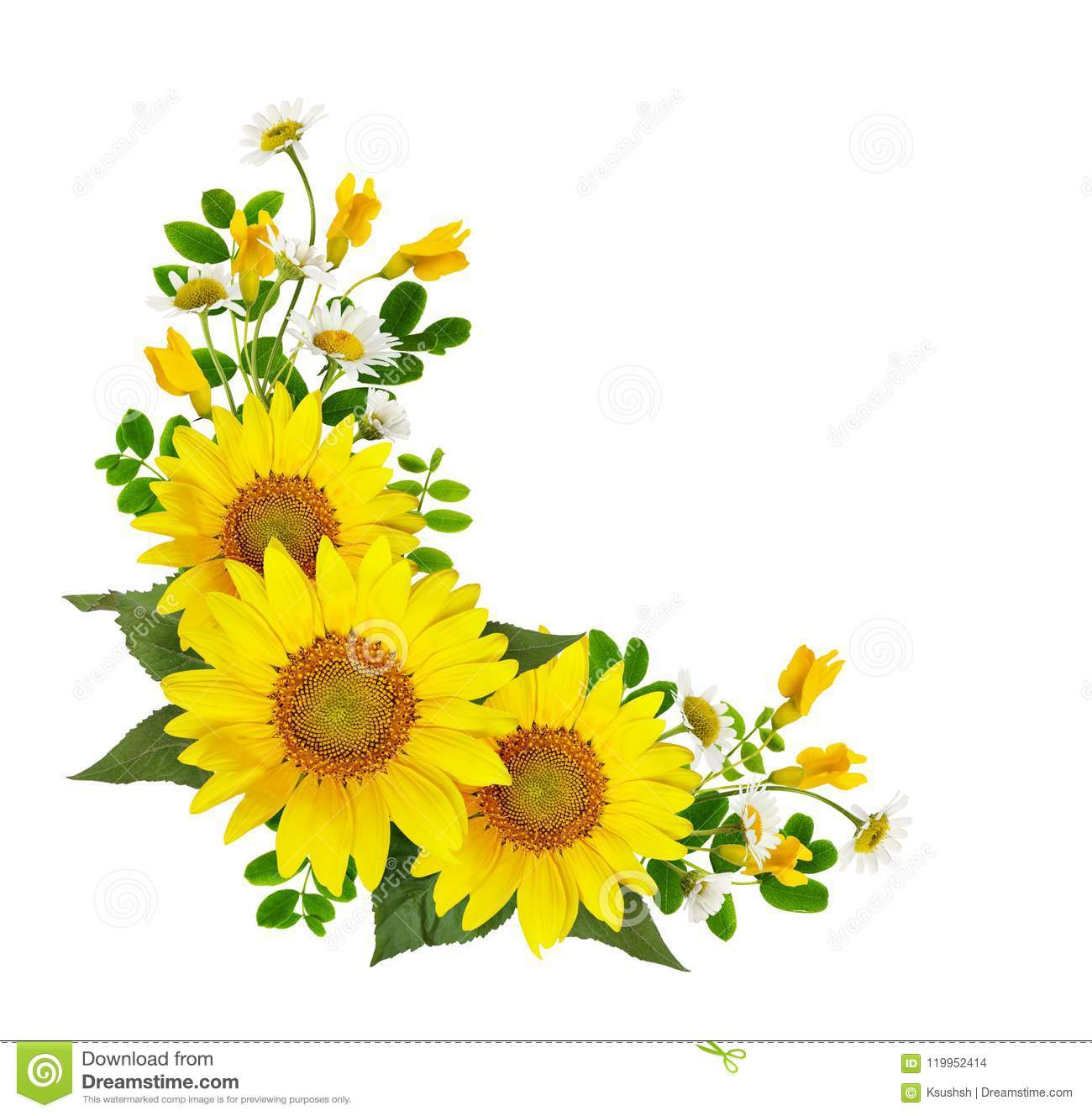 Sunflowers, daisies and acacia flowers and green leaves in a cor