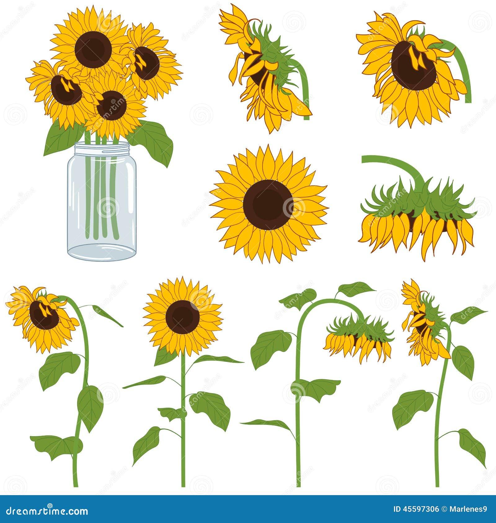 Sunflowers stock vector. Illustration of green, summer ...