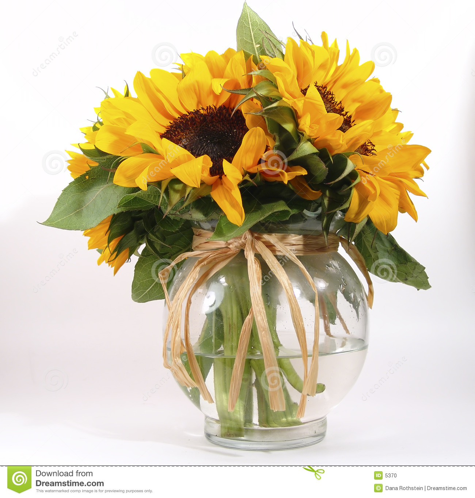 Sunflowers In Vase Stock Photo Image 5370
