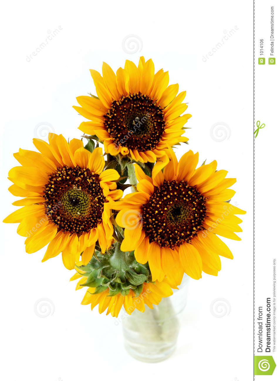 Sunflowers In The Vase Royalty Free Stock Image Image