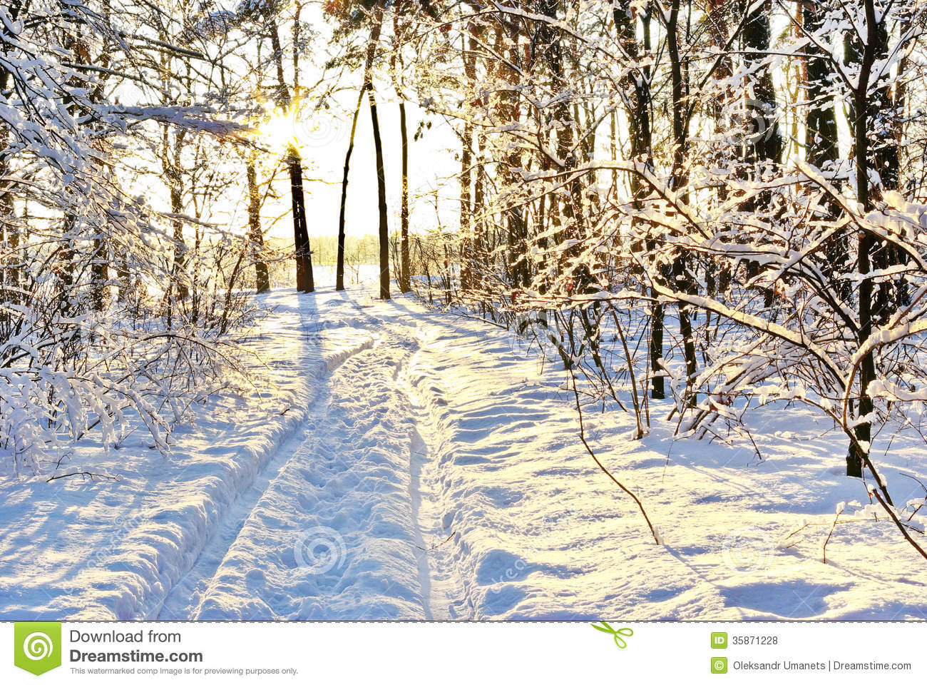 snowy forest white tree branches winter themed sunlight among the branches of trees in snowy winter 255