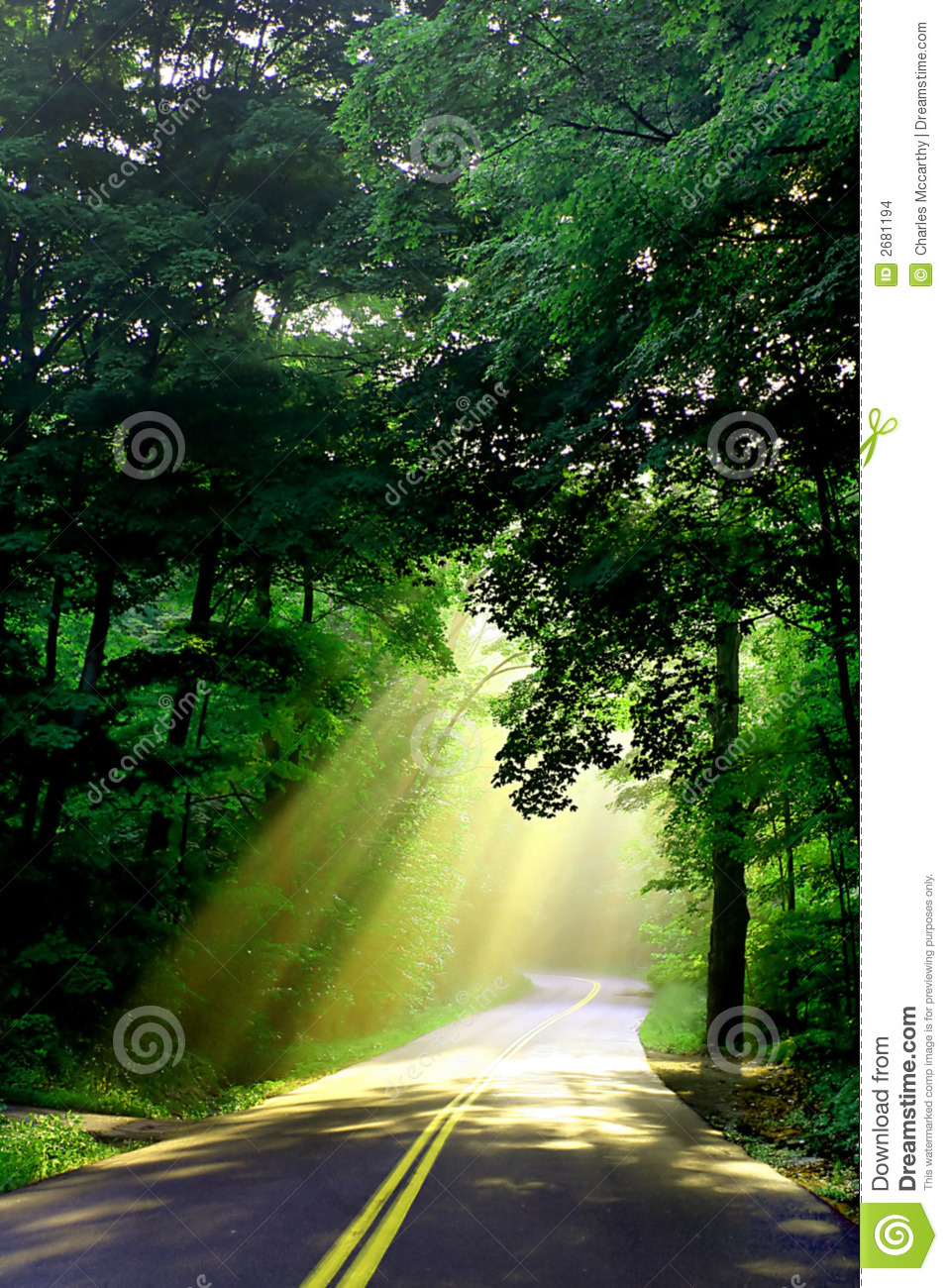 Sunlight on country road