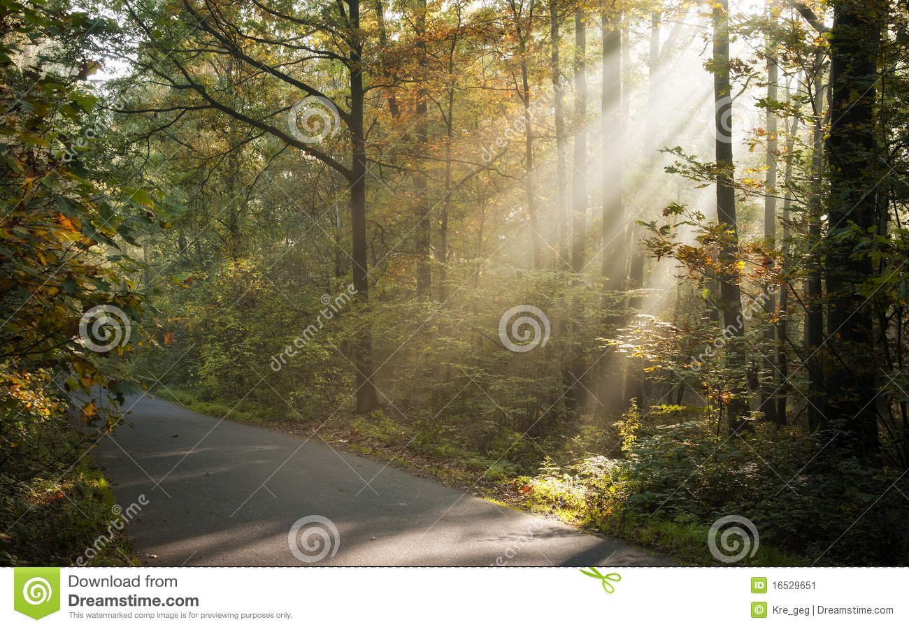 Download image Sunlight Shining Through Trees PC, Android, iPhone and ...