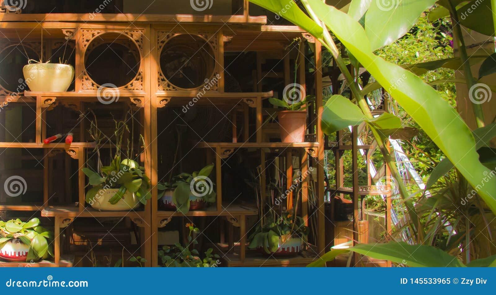 Sunlighted kabinetter och växter
