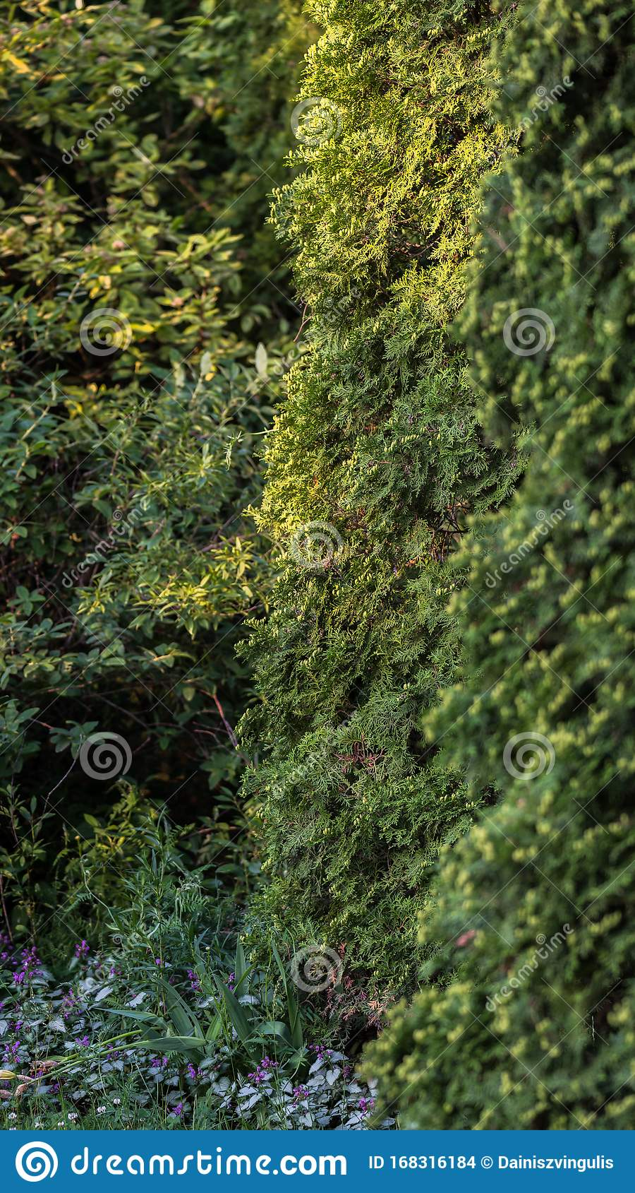 Garden Design With Ornamental Trees Stock Photo Image Of Scenic Summer 168316184