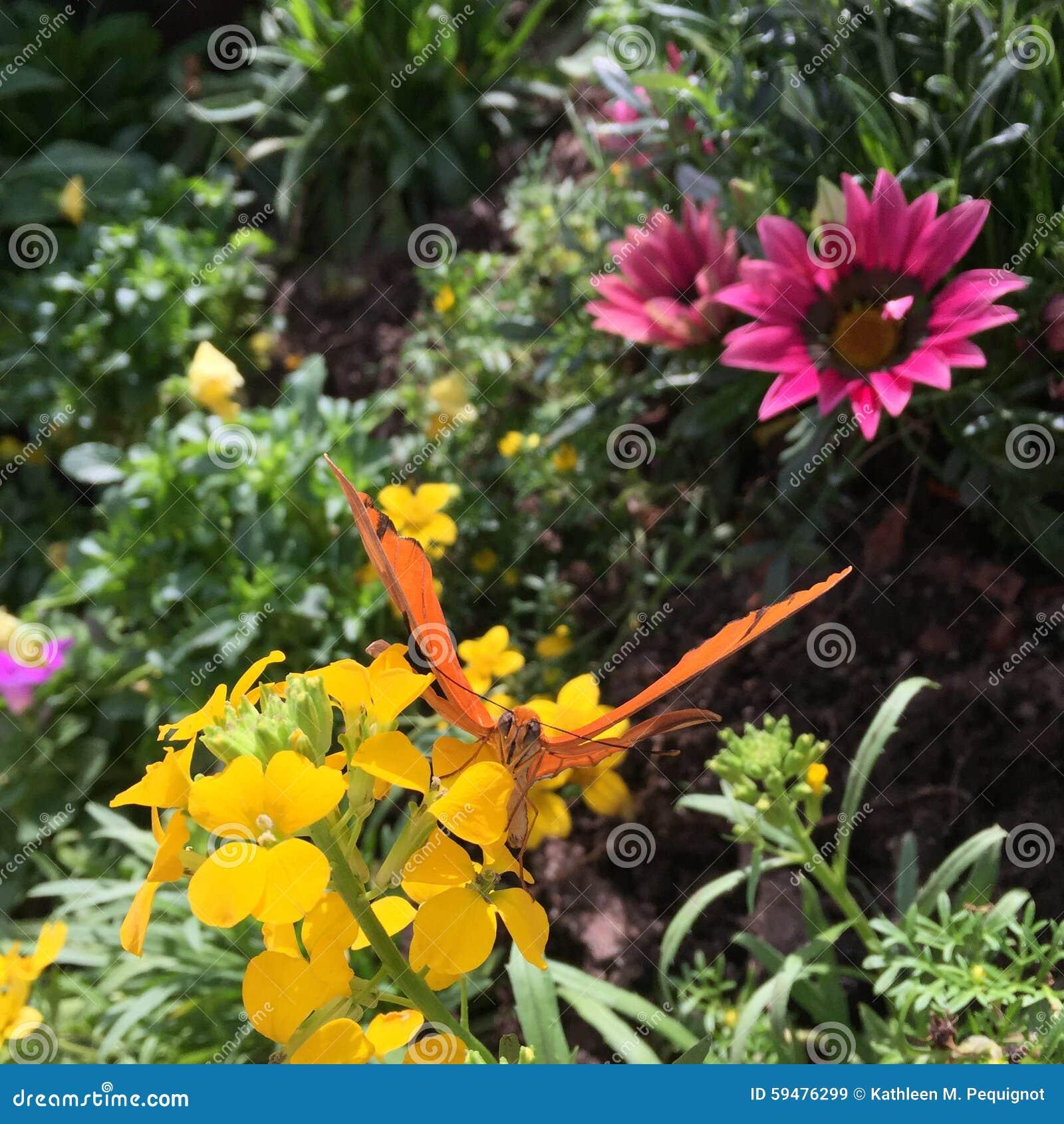 Sunlit garden florals with butterfly.