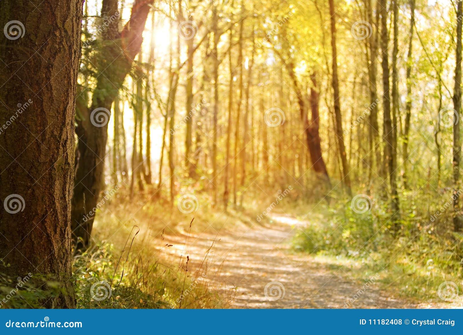 Download Sunlit nature path stock photo. Image of yellow, sunshine - 11182408