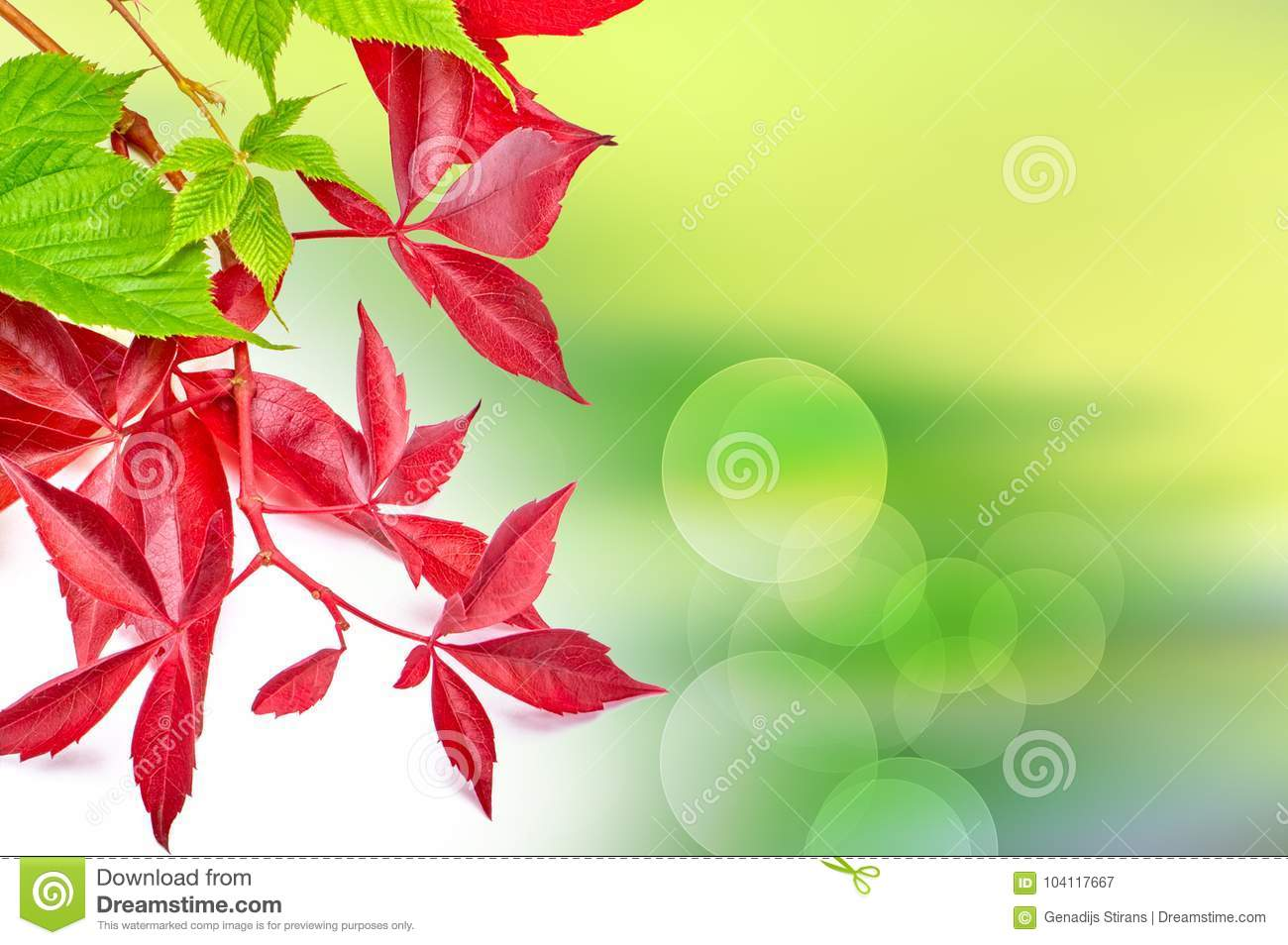 Sunny abstract green nature background with grapes leaves.