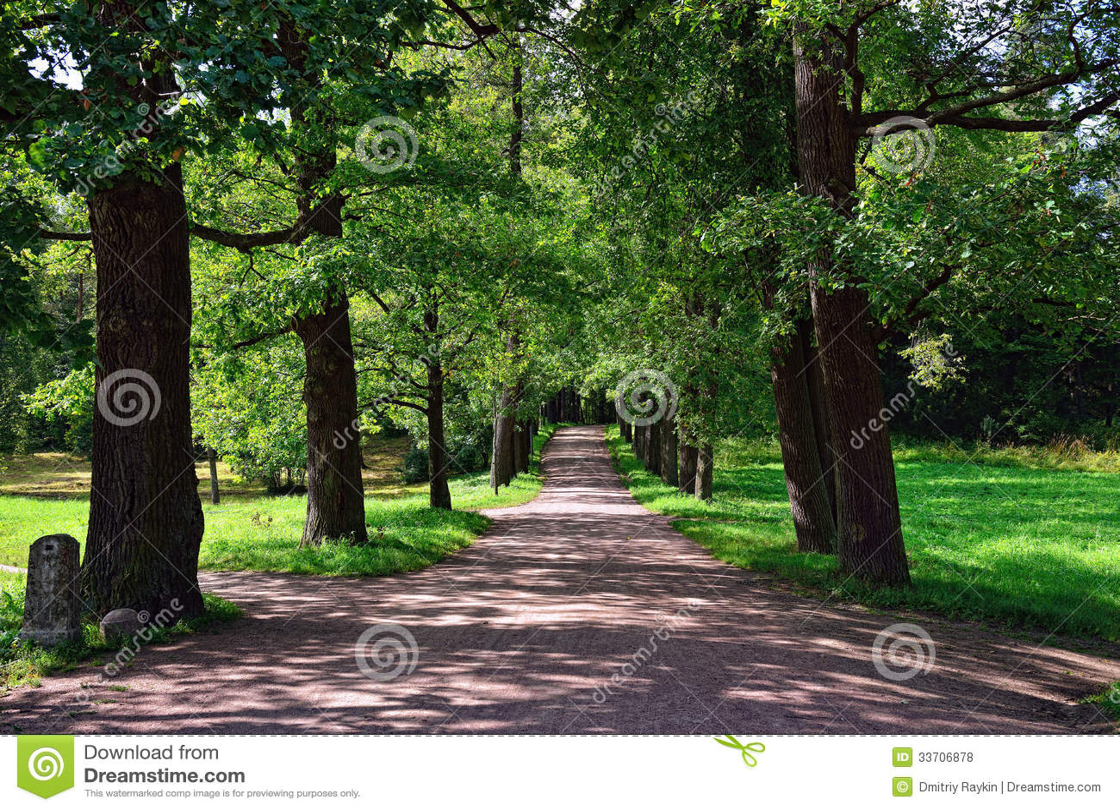 Sunny Alley In Pavlovsk Garden Royalty Free Stock Photos