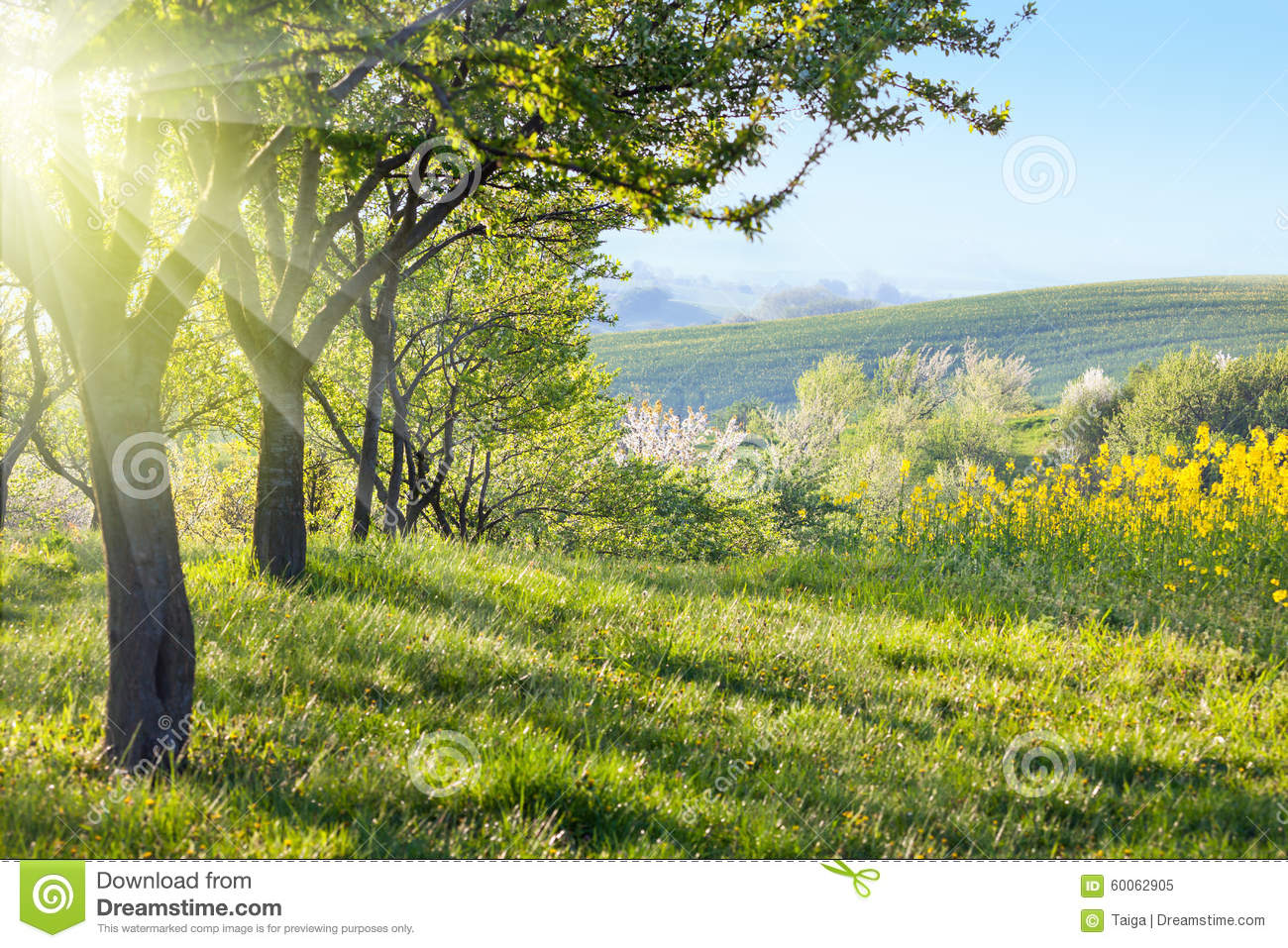 Sunny Countryside Landscape At The Morning Stock Photo