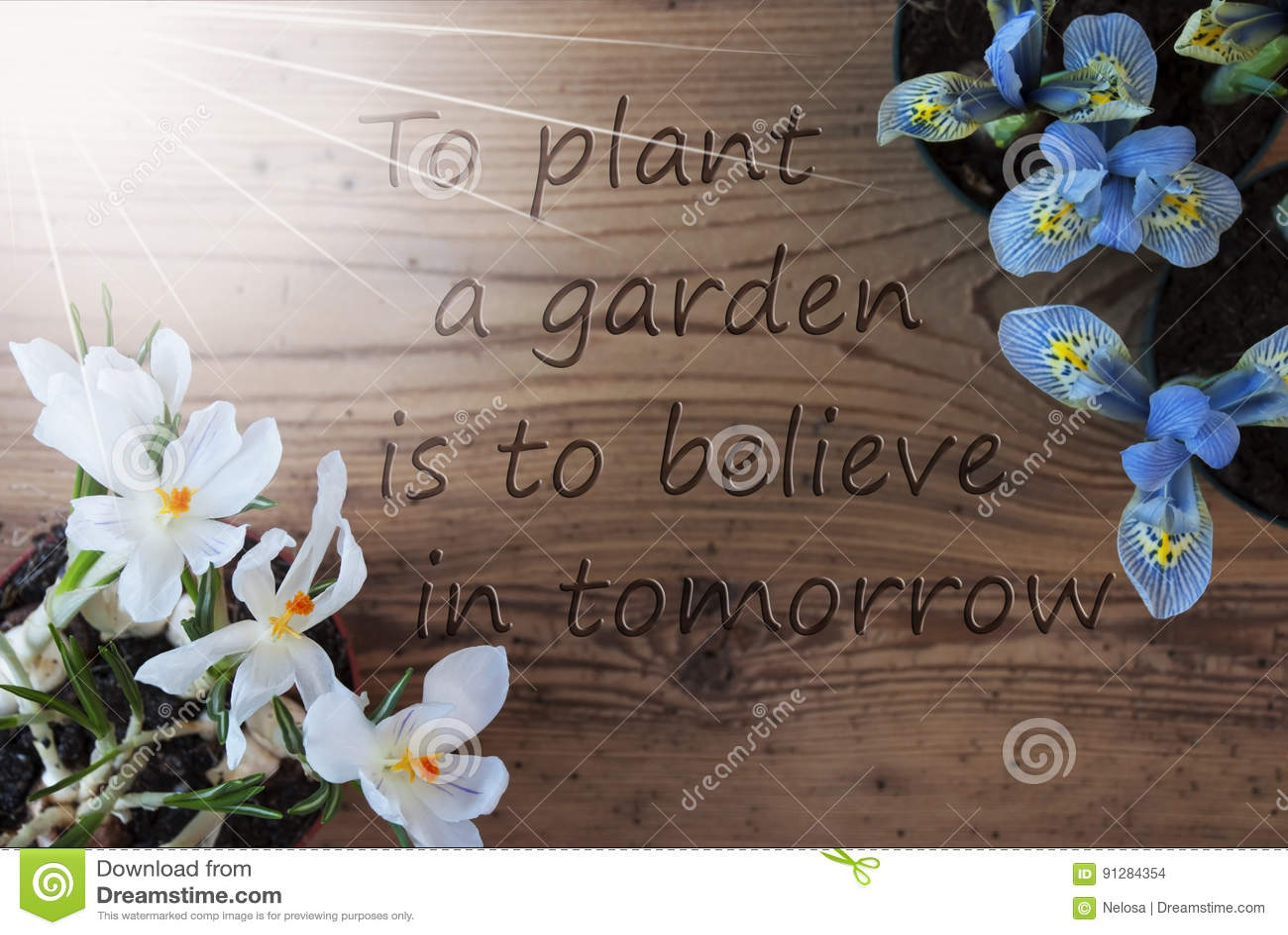 Sunny Crocus And Hyacinth citationsteckenväxtträdgård tror i i morgon