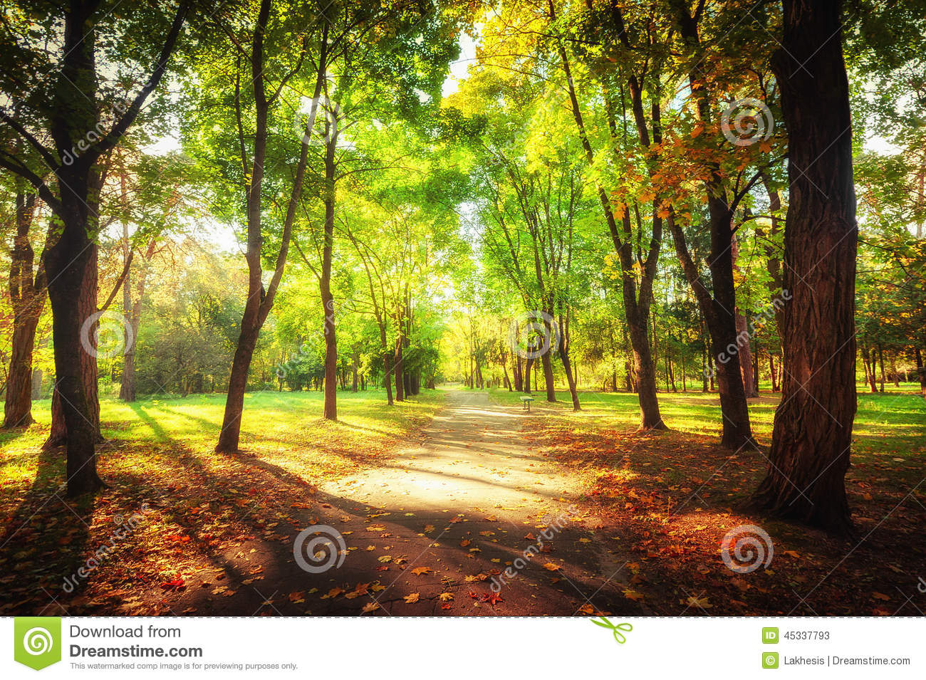 Sunny Day At Autumn Park With Colorful Trees And Pathway Stock Image ...