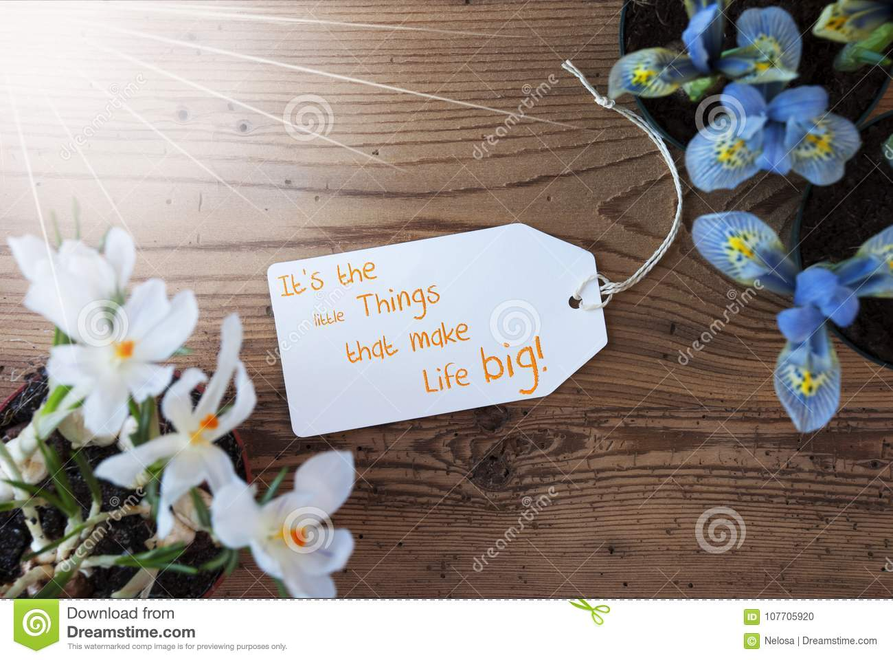 Sunny flowers label quote little things make life big stock photo sunny label with english quote it is little things that make life big spring flowers like grape hyacinth and crocus aged wooden background mightylinksfo