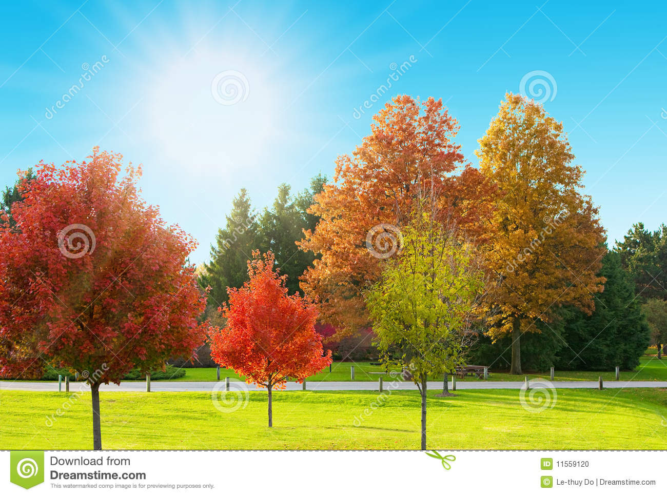 Sunny landscape stock photo image of pine autumn maple for Sunny landscape designs