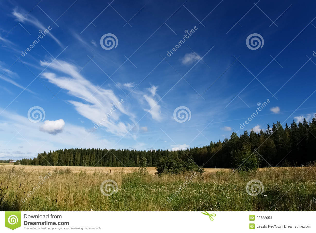 Sunny landscape of a meadow stock images image 33722054 for Sunny landscape designs