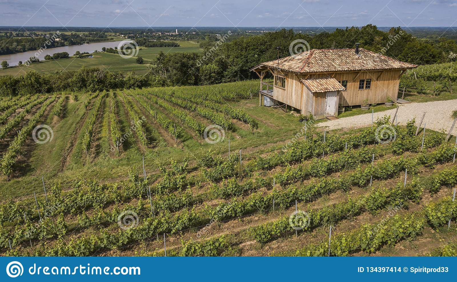 Sunny scenery with small hut in a vineyard at late summer time