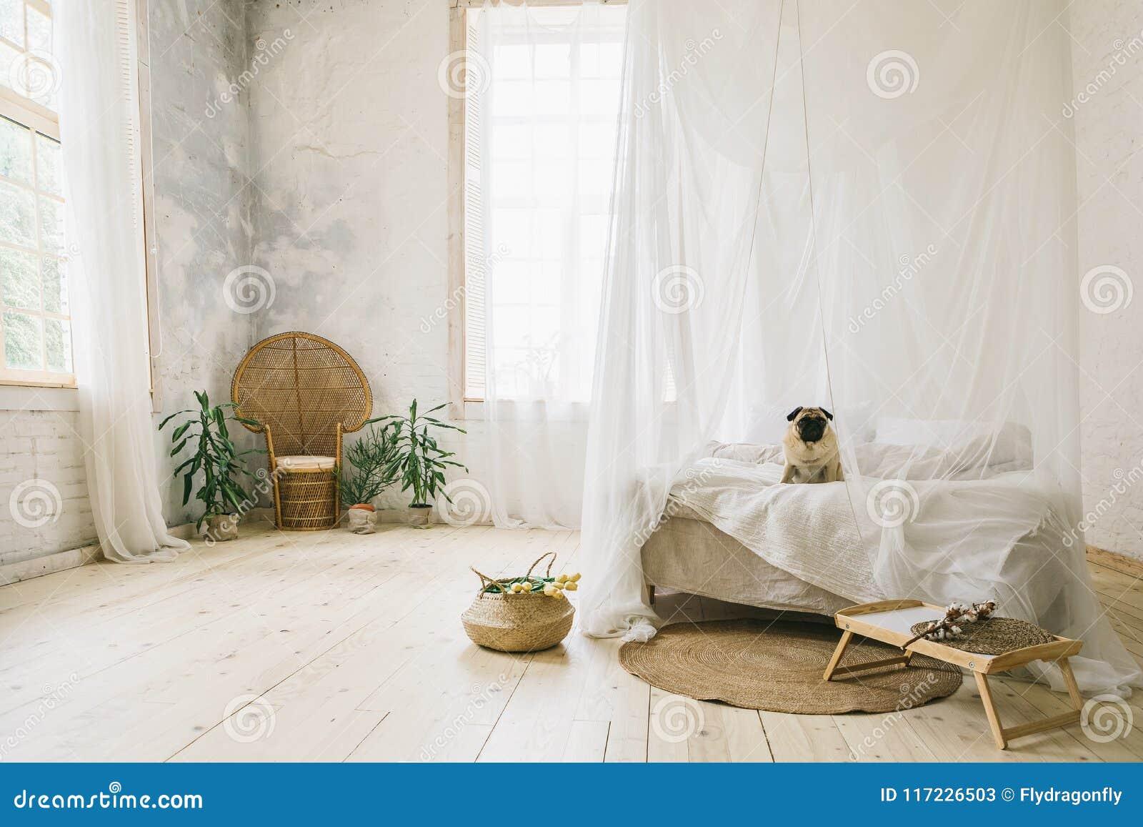 sunny skandinavian stijl binnenlandse slaapkamer houten vloer natuurlijke materialen hondzitting op het bed
