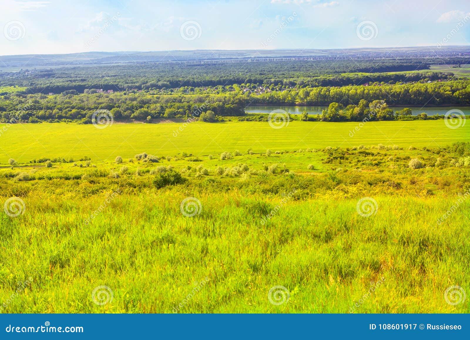 Sunny Summer Field