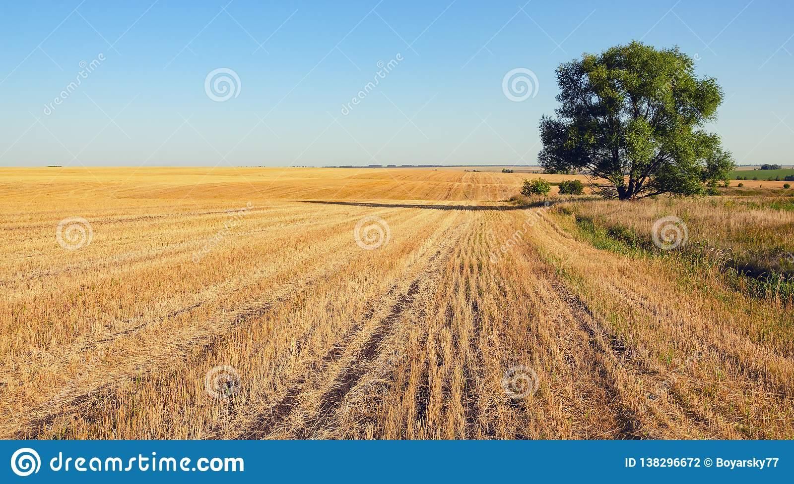 Sunny Summer Scene With Empty Rural Field After Harvesting A