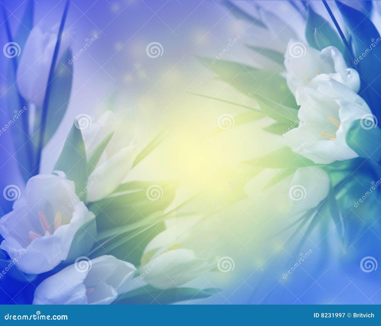 Sunny tulips background