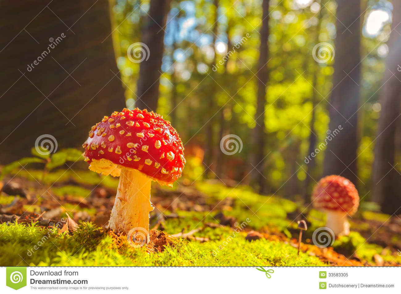 Download Sunny View Of Fly Agaric Mushrooms In A Forest Stock Image - Image of moss, magic: 33583305