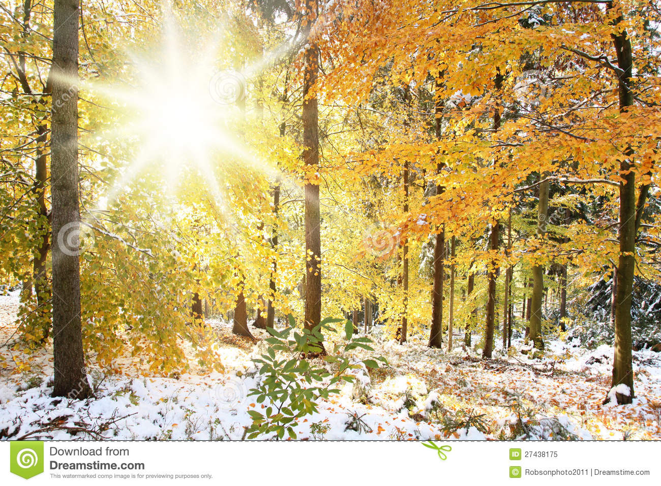 Sunny Winter Forest Scene Royalty Free Stock Photo - Image: 27438175