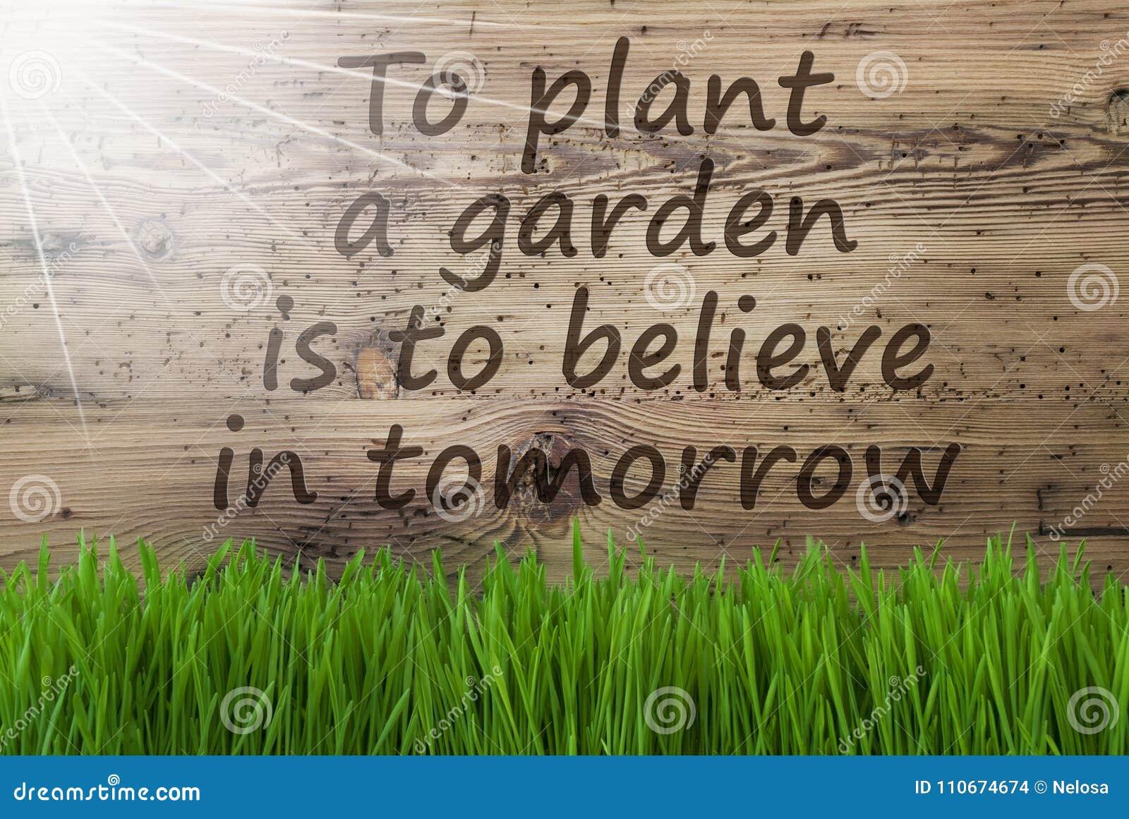 Sunny Wooden Background Gras, citationsteckenväxtträdgård tror i morgon