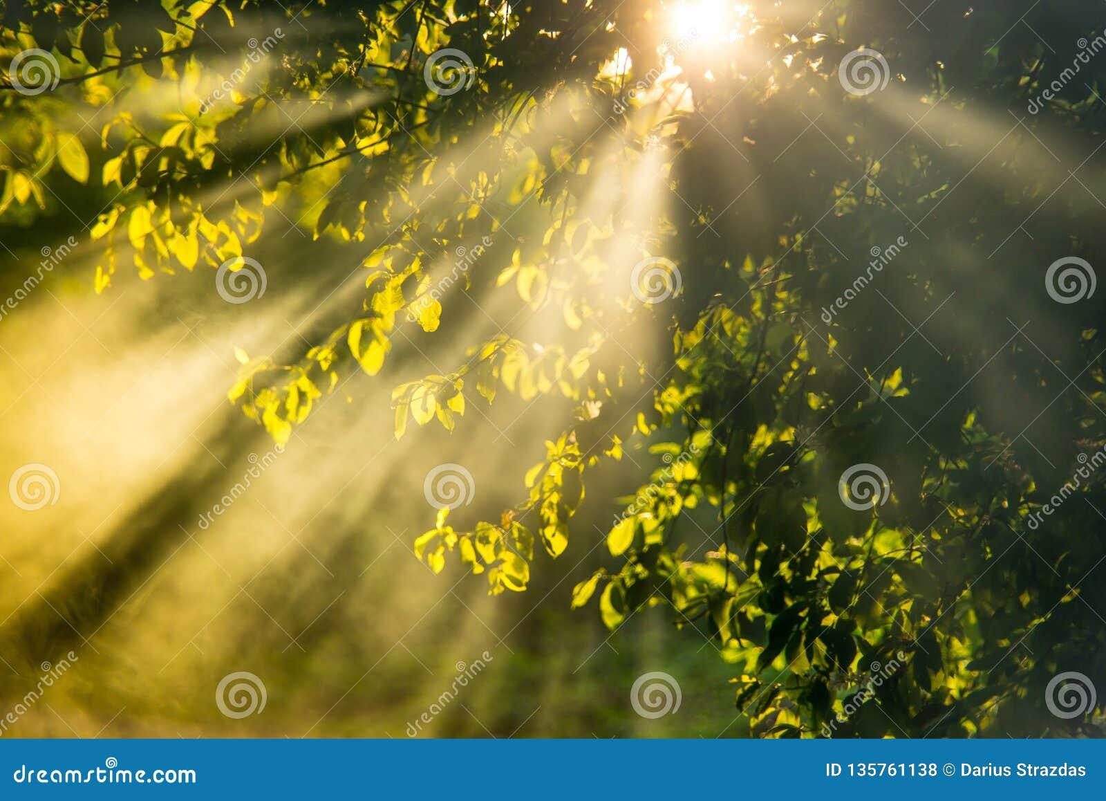 Sunrise beams through mist