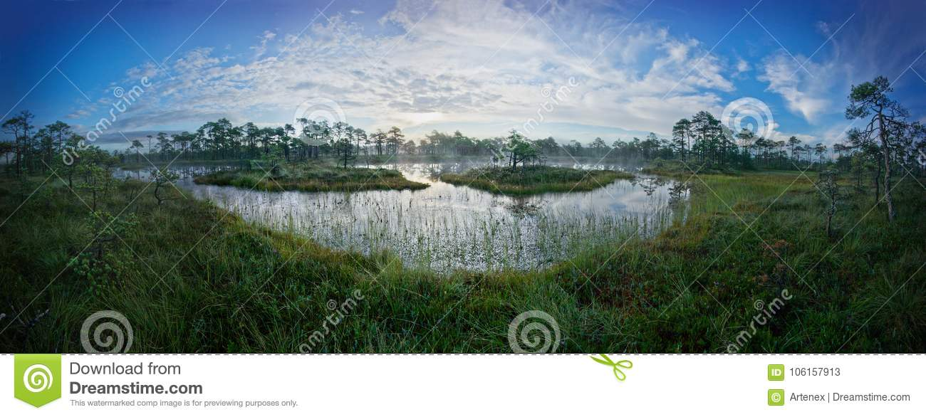 Sunrise in the bog. Icy cold marsh. Frosty ground. Swamp lake and nature. Freeze temperatures in moor. Muskeg natural environment.