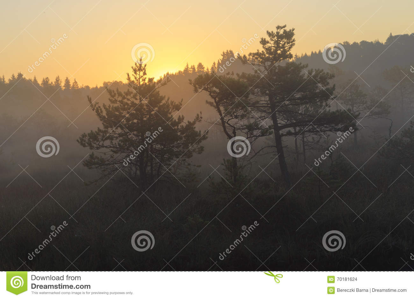 Sunrise in the bog, marsh